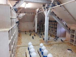 Karlsruhe: Tauben müssen trotz Lockdowns nicht verhungern