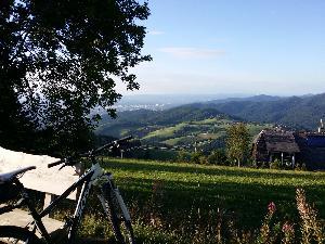 Freiburg: Vielfältiger Stadtwald